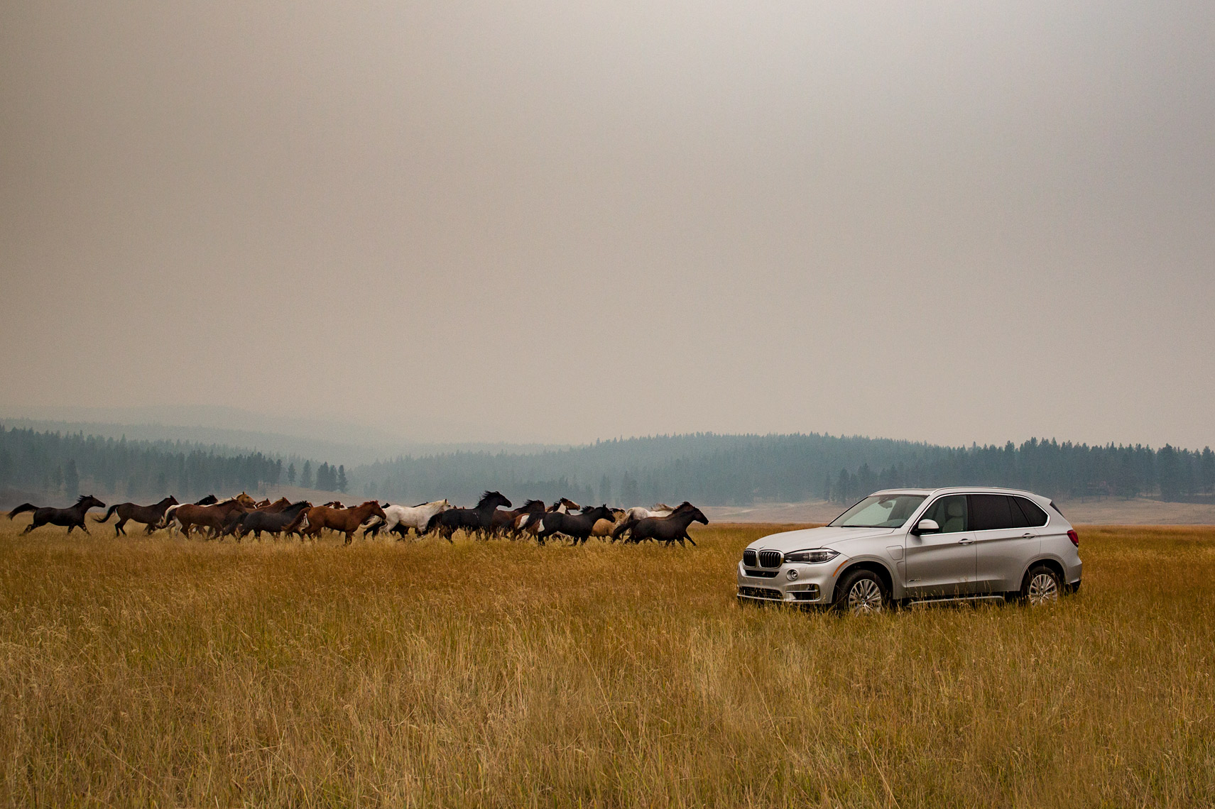 BMW X5 Paws Up Ranch Montana Poul Ober Photography